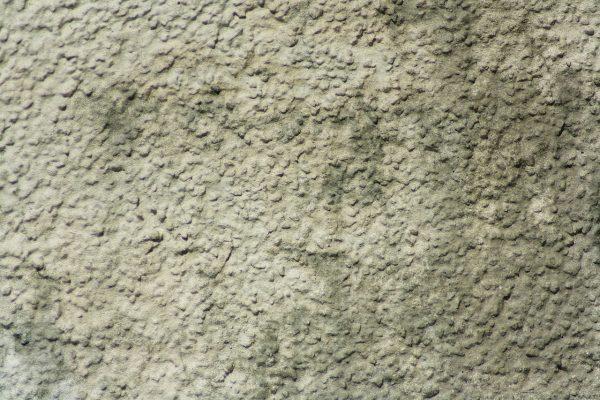 dirt2-600x400