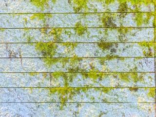 外壁・屋根のコケ